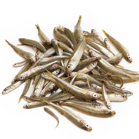 whitebait: Bunch of fresh whitebait, fresh fish Stock Photo