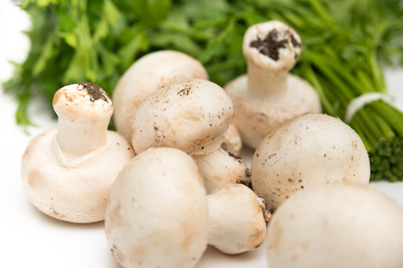 agri: Fresh champignon mushrooms