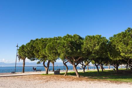 pinewood: Pinewood of On Siccu, Cagliari, Sardinia Stock Photo