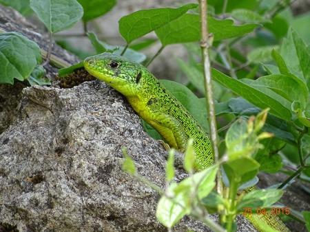 reptile: Reptile.