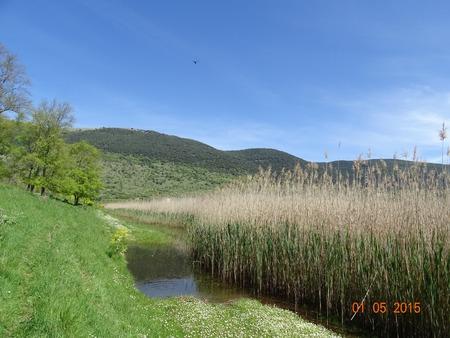 quagmire: Lake Pantano