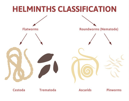 ascaris: flat and round worms, types of parasites