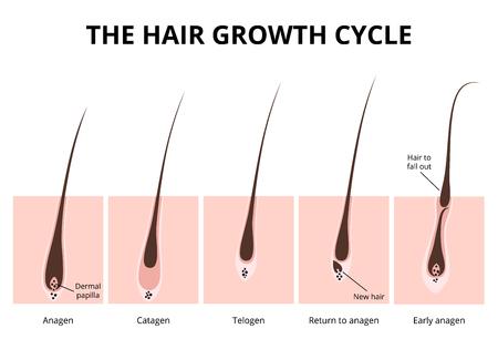 Haarstructuur