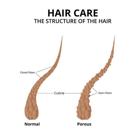 Cuticule de cheveux close-up