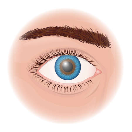 Human eye close up on a white background Vector Illustratie