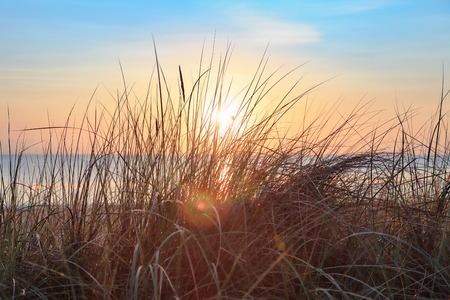Dune grass at sunrise on the beach, on the island of Usedom