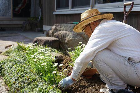 Elderly man planting a garden