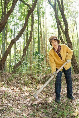 Elderly woman harvesting a bamboo shoot 免版税图像