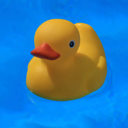 Swimming rubber duck photo