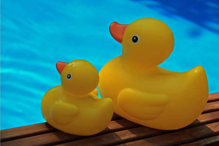 Two rubber ducks at the pool edge Stock Photo