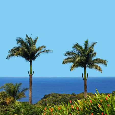 Two palmtrees in front of the ocean Stock Photo - 9315916