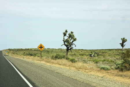 Joshua tree and a traffic sign at a highway in a desert photo