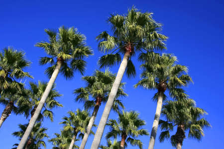 Palm trees over blue sky in up view