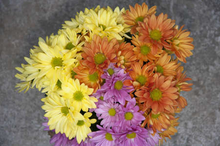 tri: Tri colored Asters over grey texture