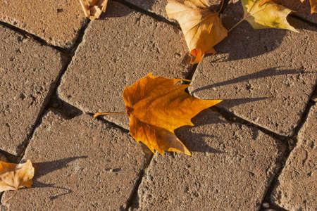 Closeup of a fallen leaf on pavement photo