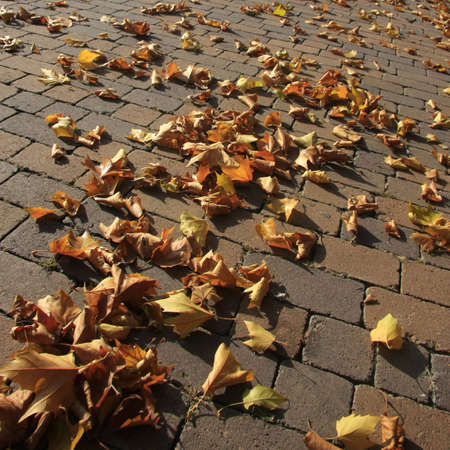 Low angle shot of leaves on the ground photo