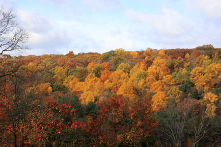 Overview shot of an Indian Summer Forest Stock Photo - 13305860