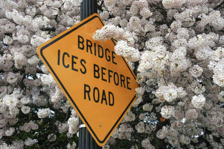 ices: Traffic sign bridges ices before road over cherryblossoms Stock Photo
