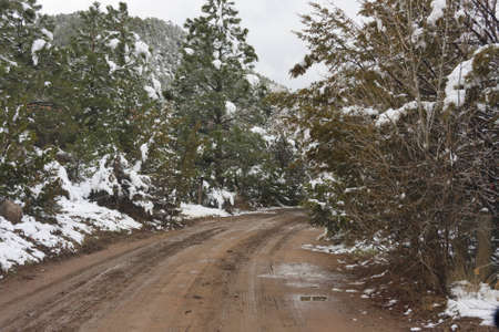 unpaved road: Unpaved road through snowy forest Stock Photo