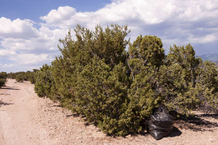 Garbage bag in landscape photo