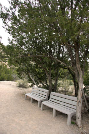 Rest in the desert on a bench under a tree photo