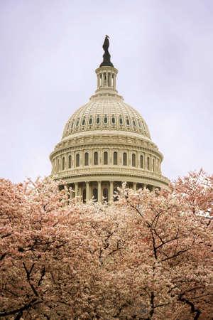 Il Campidoglio a Washington DC durante cherry blossom