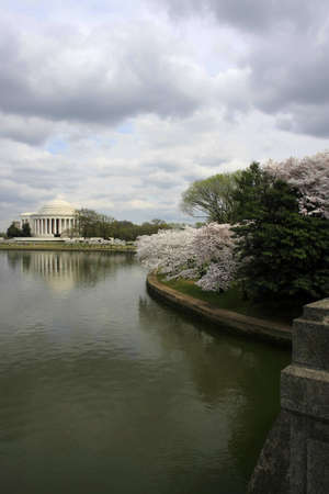 Jefferson Memorial during cherry blossom photo