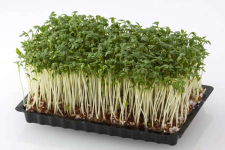 Horizontal shot of fresh cress in a black plastic box photo