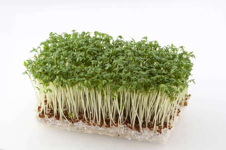 Rectangular cut of resh cress on white soil photo