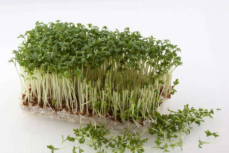 Fresh cress partly cut off with sprouts in front photo
