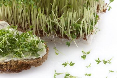 A bread with butter and cress in front of fresh cut cress photo