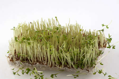 Completely cut off fresh cress Stock Photo