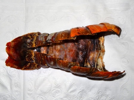lobster tail: An empty lobster tail on a napkin Stock Photo