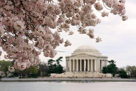Jefferson Memorial durante il festival di fiori di ciliegio
