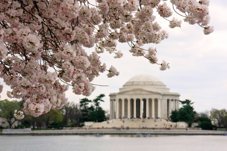 Jefferson Memorial during cherry blossoms festival Stock Photo