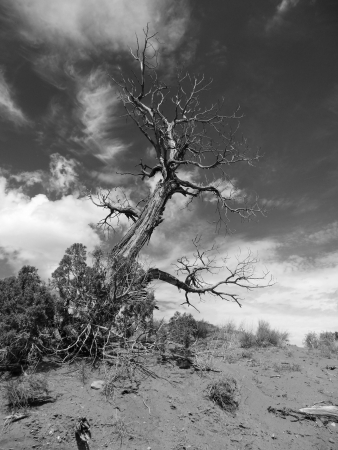 Black and white shot of a dead tree under dramatic clouds Stock Photo - 18633179