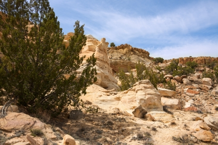 Junipers on colorful sandstone formations in Ojito Wilderness photo