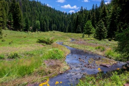 River is flowing through alpine landscape in New Mexico