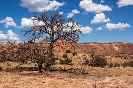 rocky mountain juniper: Colorful landscape with dead tree in New Mexico near Ghost Ranch