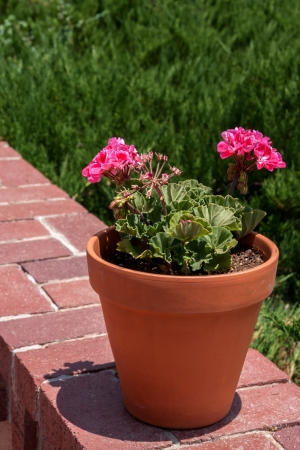 Vertical shot of a flower pot with pink storksbills on a wall photo