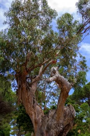 Colpo verticale di un albero con rami impressionanti Archivio Fotografico