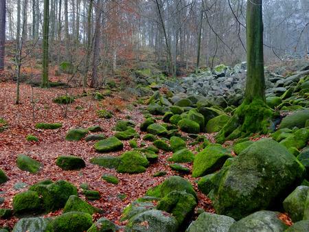 Immagine di un bosco filtrata del mattino con la nebbia