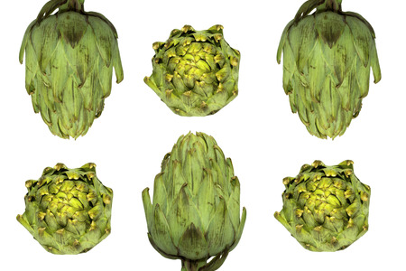Two rows of artichokes isolated on white Stock Photo