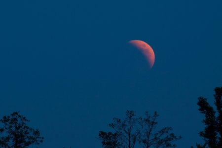 tree disc: Photo lunar eclipse on a clear blue night sky over the trees