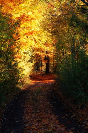 Autumn still life with a forest path with colorful tunnel of trees, dreamy Stock Photo
