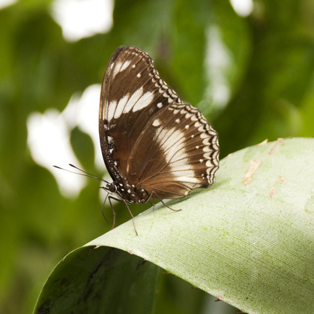 buterfly: Buterfly on leaves Stock Photo