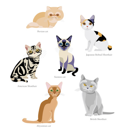 Different breeds of cats: Persian, Japanese Bobtail Shorthair, Siamese, American Shorthair, Abyssinian, British Shorthair isolated on white background Illustration