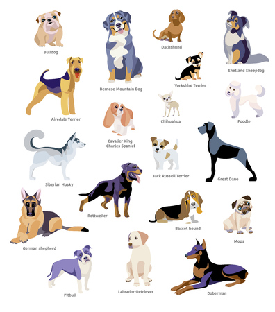 Vector illustration of dogs breed isolated on white background