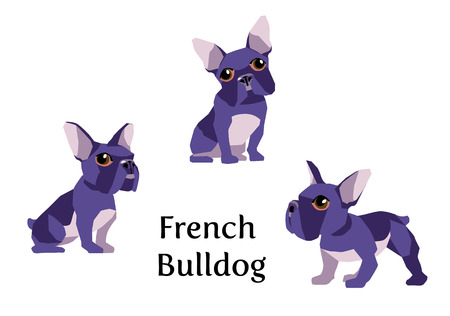 boston bull terrier: Vector illustration of french bulldog in different poses isolated on white background.