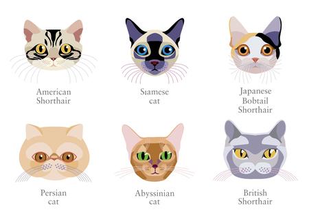 Verschillende kattenrassen: Perzische kat, Japanse korthaar, Siamees, Amerikaanse korthaar, Abessijnse kat, Brits korthaar geïsoleerd op witte achtergrond